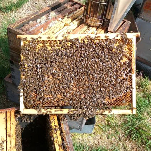 Votre miel en direct de l'apiculteur avec la miellerie d'Huelgoat